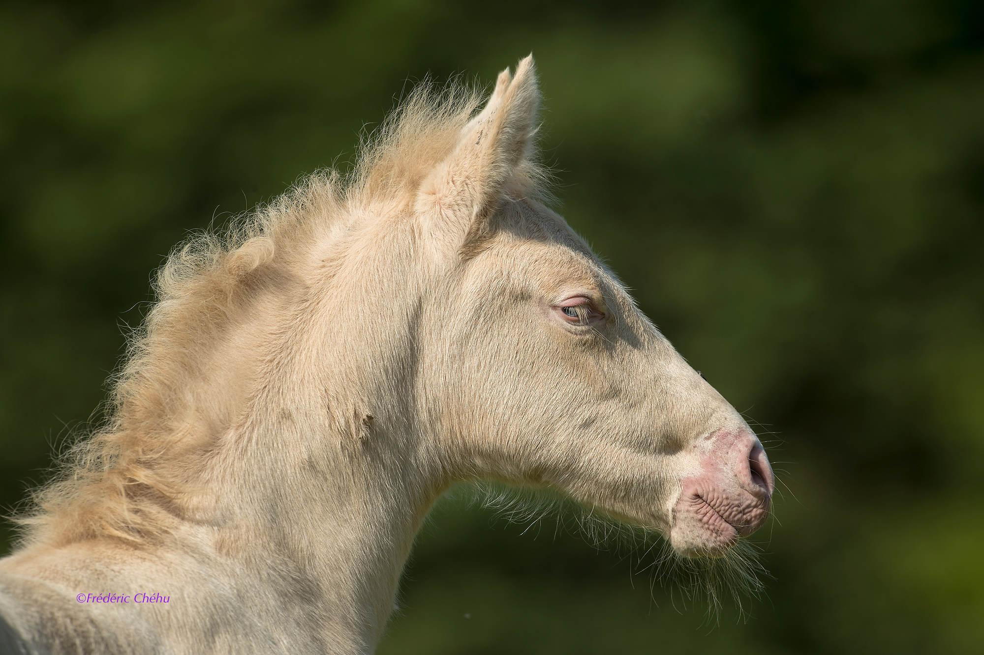 Elevage de Chevaux de Pure Race Espagnole.Elevage du Puits Carr?.