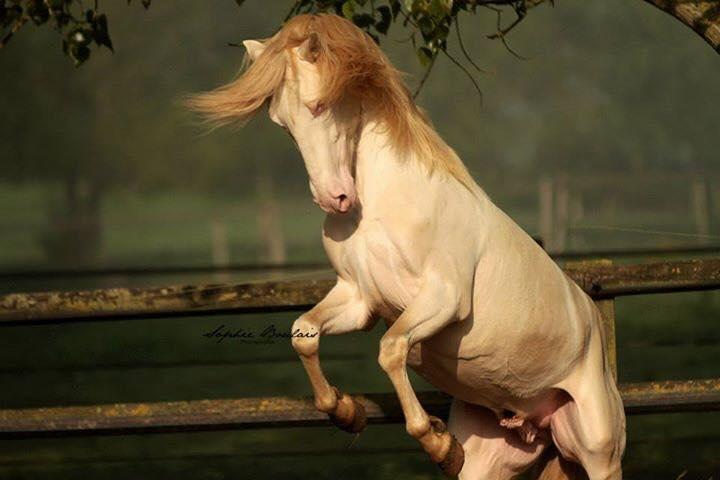 Rio cabre